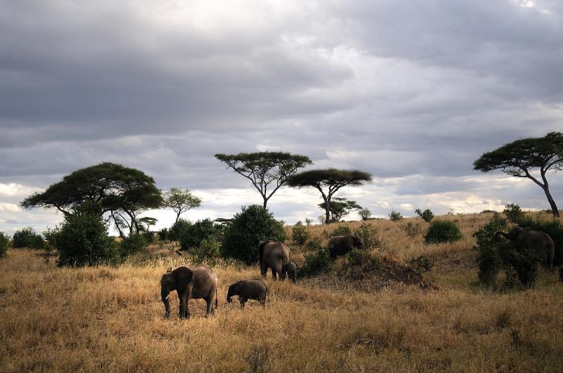 Safari Serengeti